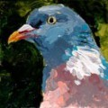 Painting by Frances Browne. Pigeon.